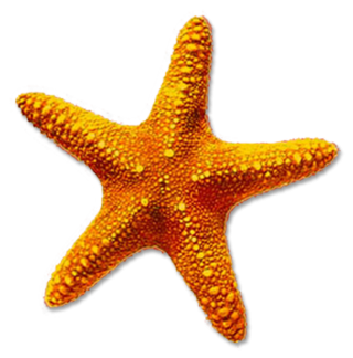 High-quality Starfish Cliparts For Free! PNG images