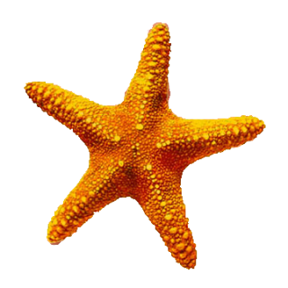 Download Starfish Latest Version 2018 PNG images