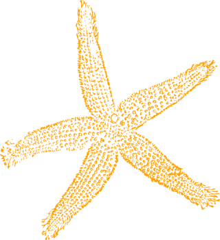 Best Free Images Clipart Starfish PNG images