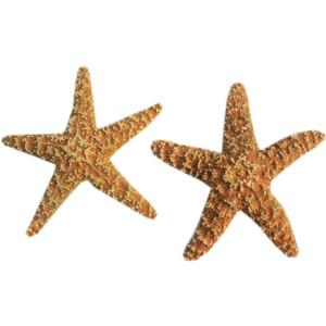 Png Starfish Best Clipart PNG images