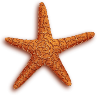 Best Starfish Image Png Collections PNG images