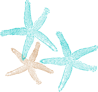 Png Starfish Vector PNG images