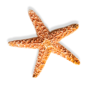 Download Free High-quality Starfish Png Transparent Images PNG images