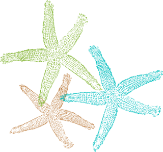 Free Download Of Starfish Icon Clipart PNG images