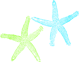 Download For Free Starfish Png In High Resolution PNG images