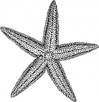 Download Starfish Icon Vectors Free PNG images