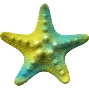 Starfish Image PNG Transparent PNG images