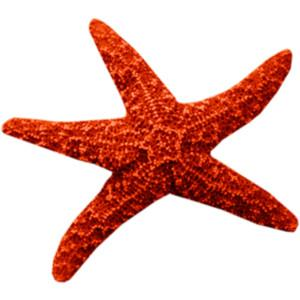 Photo PNG Starfish PNG images