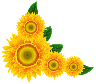 Sunflower PNG Image PNG images