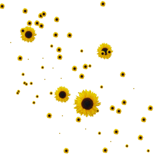 Sunflower Clipart Png Collection PNG images