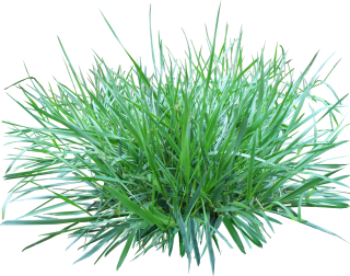 Grass Png Image, Green Picture PNG images