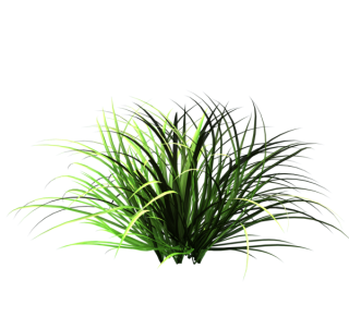Nature Tall Grass Png PNG images