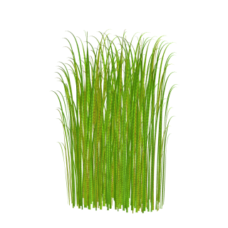 Png Grass Clipart Transparent Image PNG images