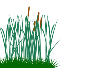 Tall Grass Clip Art Png PNG images