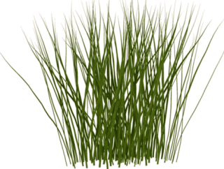 Tall Grass Png Photos PNG images