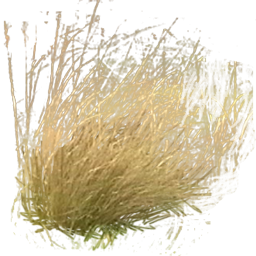 Tall Grass Png Pictures PNG images
