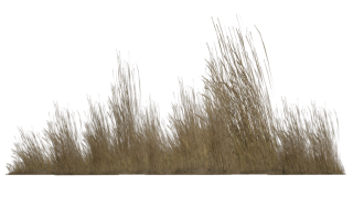 Tall Grass Png Transparent PNG images