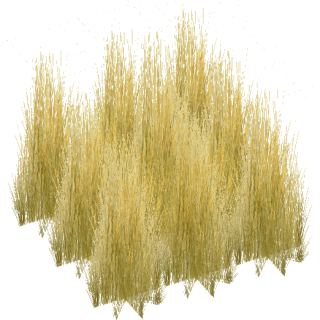 Tall Grass Texture Png PNG images