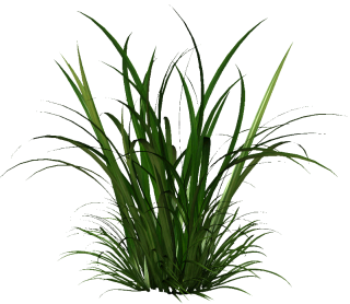 The Gallery Tall Grass Png PNG images