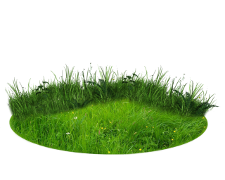 There Grass Png PNG images
