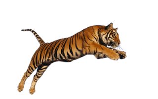 Png Download Tiger High-quality PNG images
