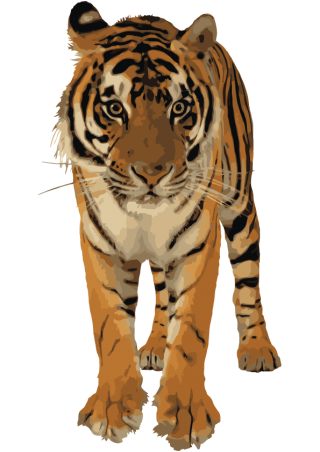 Clipart Best Png Tiger PNG images