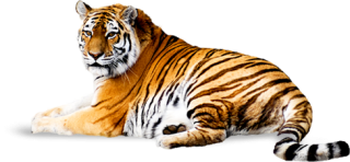 Download Free PNG Tiger PNG images