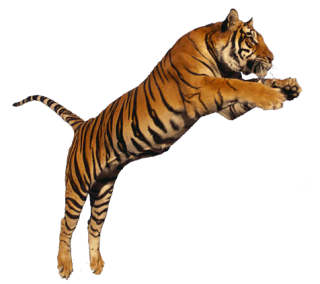 Collection Clipart Png Tiger PNG images