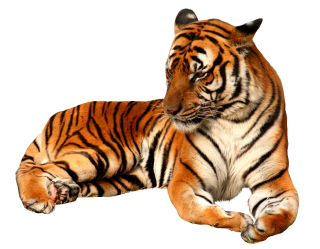 Free Download Tiger Png Images PNG images