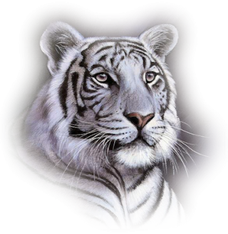 White Tiger Png PNG images