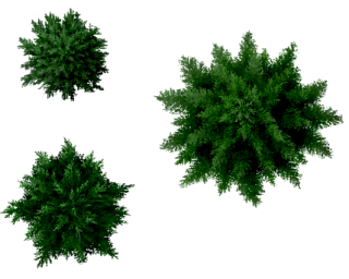 Conifers Tree Top PNG images