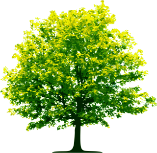 Fall Trees Plan Png PNG images