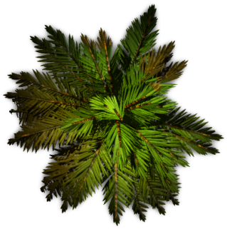 Palm Tree Top PNG images