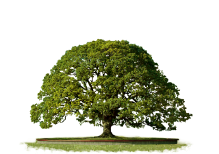 Clipart PNG Top Tree PNG images