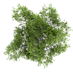 PNG Top Tree Download Free PNG images