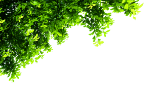 Top Tree Transparent Background PNG images