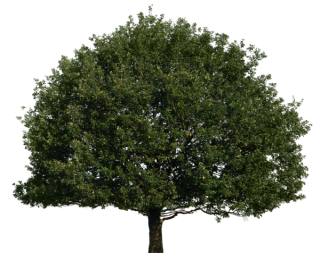 Tree Top Png Tree PNG images