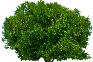 Tree Top View PNG images