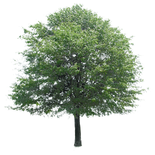 Free Download Of Tree Icon Clipart PNG images