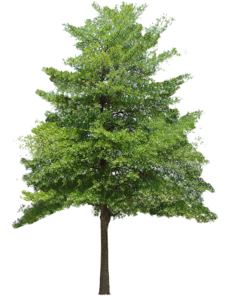 Free Download Tree Vector Png PNG images