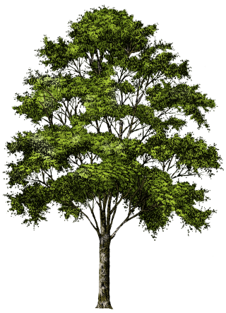 Clipart Tree Collection Png PNG images