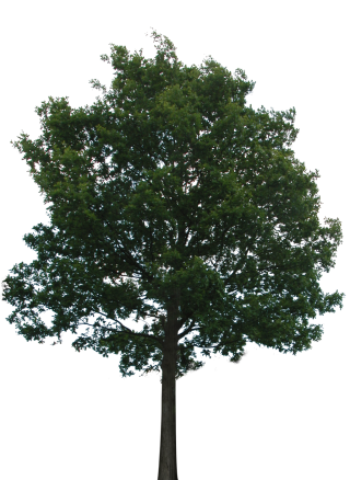 Hd Tree Png Transparent Background PNG images