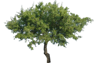 Vector Png Tree PNG images