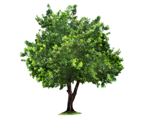 Tree Png Background Transparent PNG images