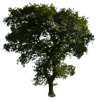 Clipart Tree Png Download PNG images
