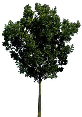 Transparent Png Background Tree PNG images