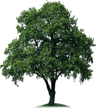 Download Free High-quality Tree Png Transparent Images PNG images