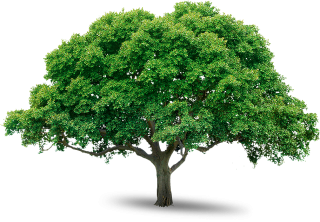 Tree Icon Download PNG images