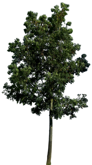 Best Free Tree Png Image PNG images