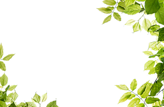 Green Leaf From Edge Hd Video Frame Transparent Background PNG images